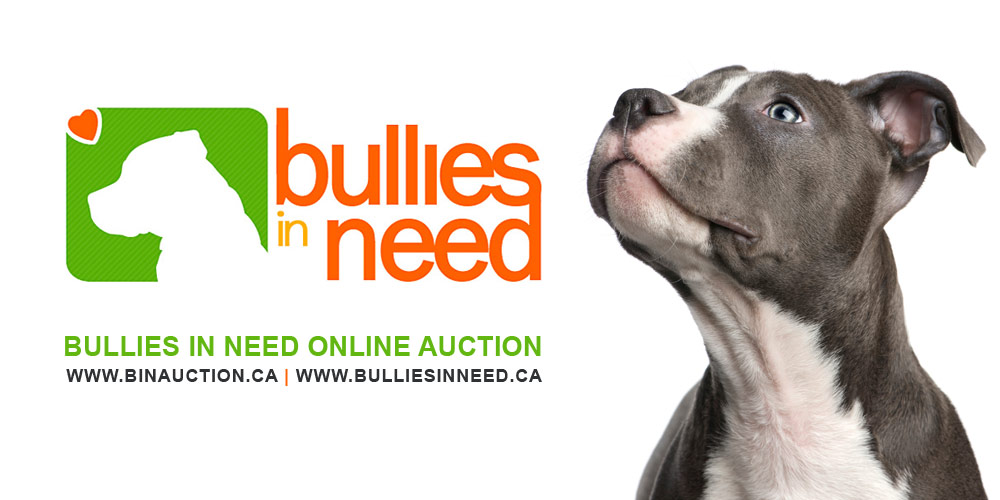 CHARITY SPOTLIGHT | Bullies in Need Rescue
